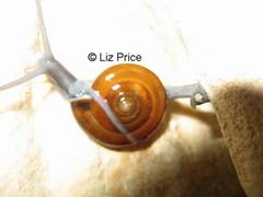 snail-Battambang_320.jpg