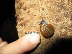 snail-Battambang_332.jpg